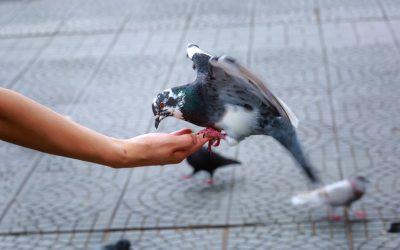 Alle duiven op …