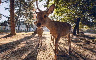 De Omgevingswet en Wilde Dieren – hebben we er wat aan? (deel 2)