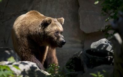 I am bear…