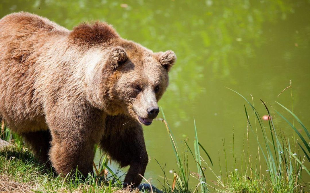 CSI in wildlife management